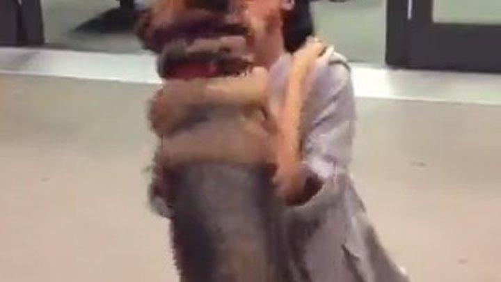 Пёс встретил хозяйку в аэропорту..