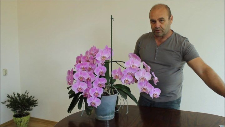 Орхидея. Как вырастить сильное здоровое растение!