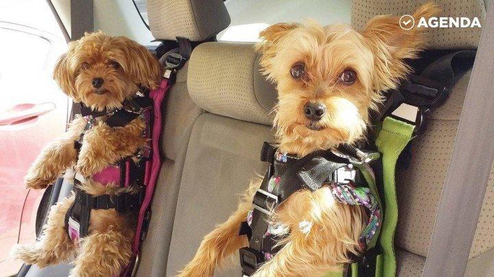 Кресло-ремень безопасности для собак