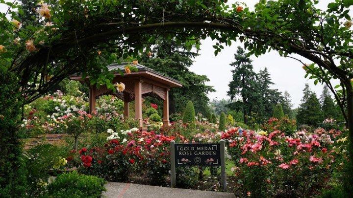 Portland Rose Garden - сад Роз в г. Портленд , штат Орегон