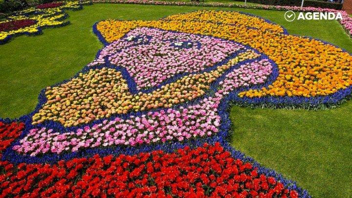 Вы только взгляните на этот уникальный парк Кёкенхоф с миллионами цветов!