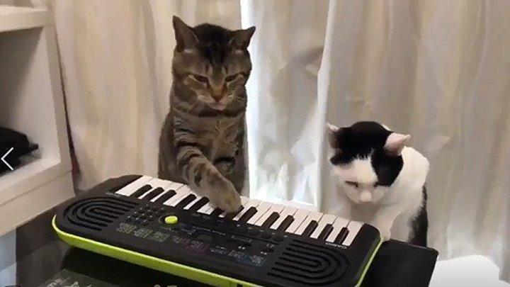 Смешные коты и котята