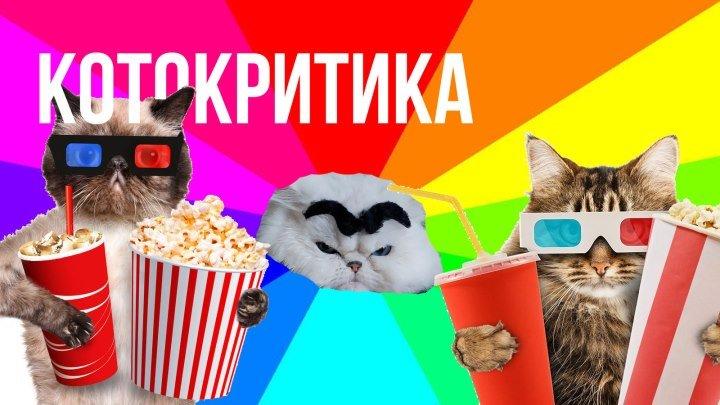 КОТОКРИТИК #3: Звягинцев и кот Супермена