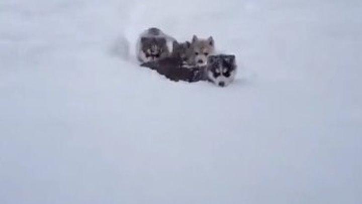 Отряд снегоходов!
