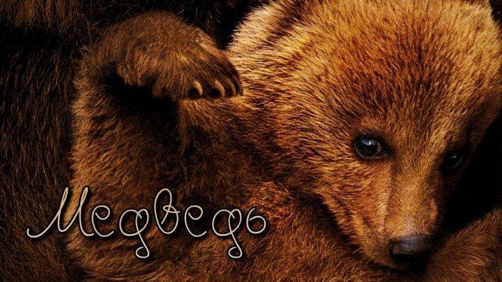 Медведь (1988) HD1080