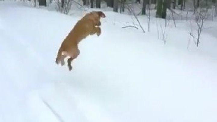 Снежное погружение..