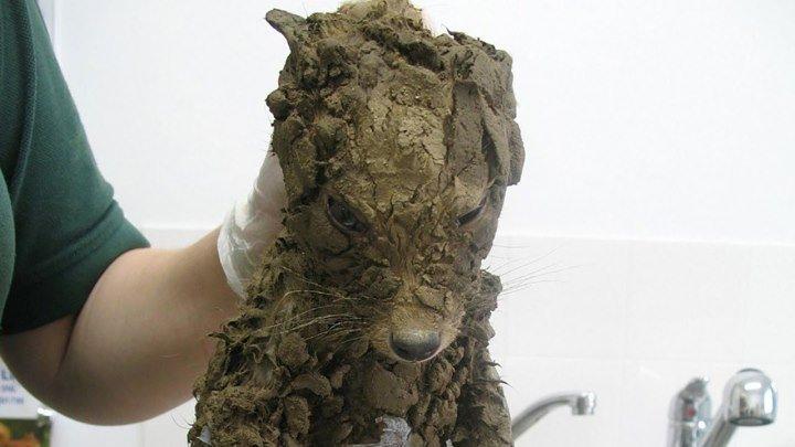 Рабочие, нашли грязного щенка, но когда они его почистили их ждал сюрприз