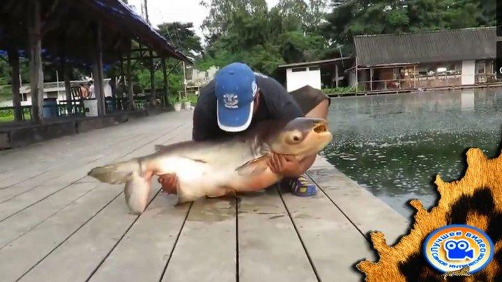 Три госудаства и три пойманых супер рыбы