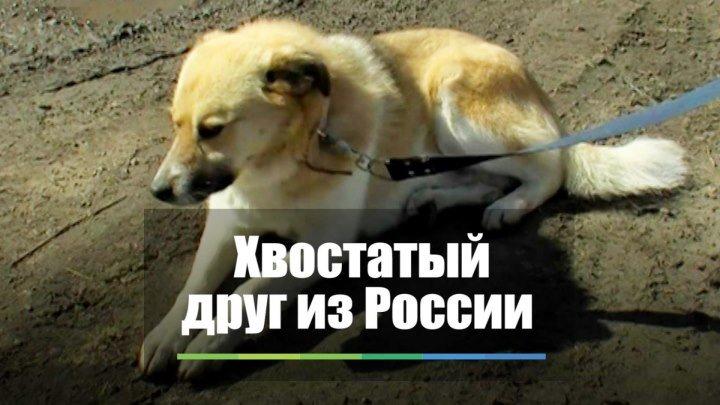 Хвостатый друг из России