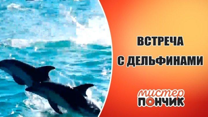 Встреча с дельфинами