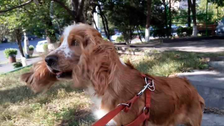 Ветер Дует В Лицо собака