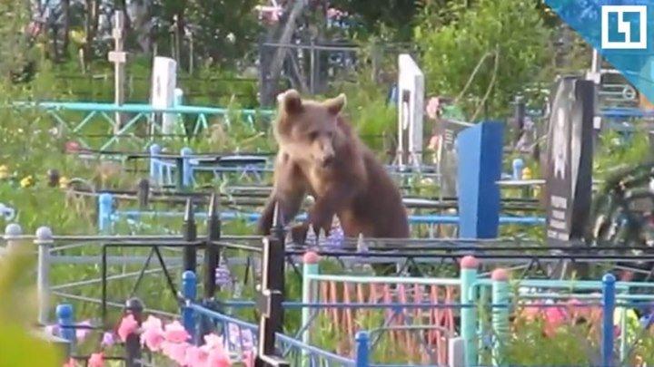 Медведи разрыли могилы
