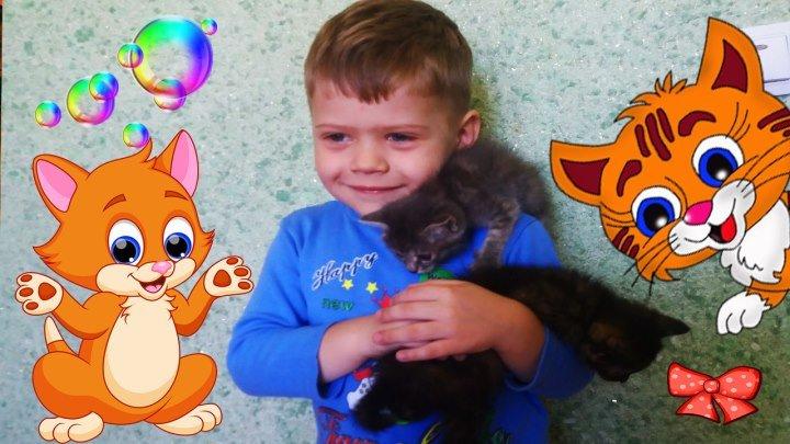 МИЛЫЕ КОТЯТА Ищем дом для маленьких котят