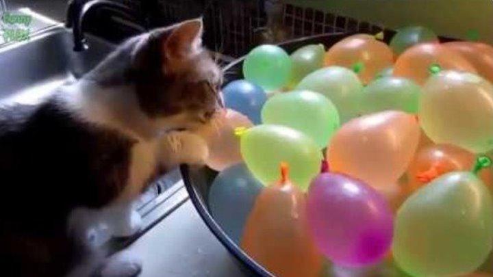 Смешные кошки. Прикол.