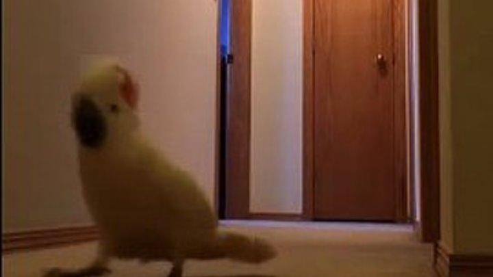 """Попугай какаду ищет Наташу в коридоре. """"Наташа ты где?"""""""