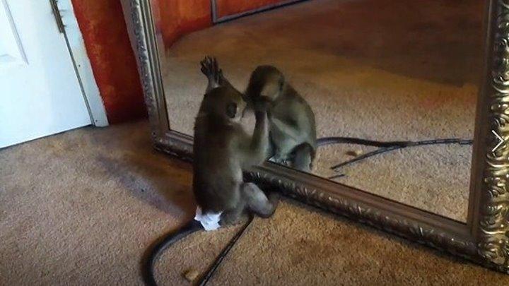Смешные обезьяны. Подборка