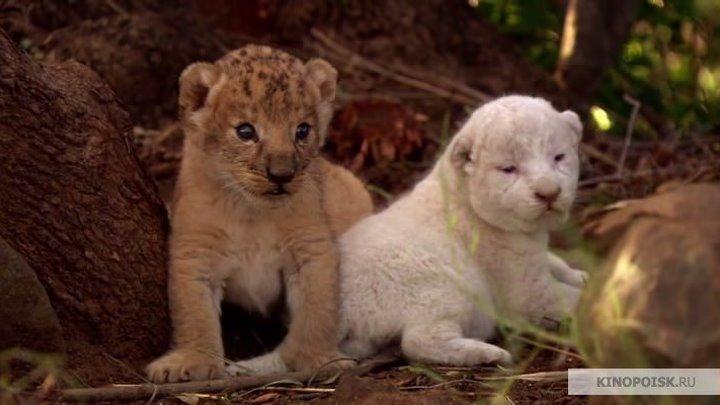 Белый лев. драма, семейный