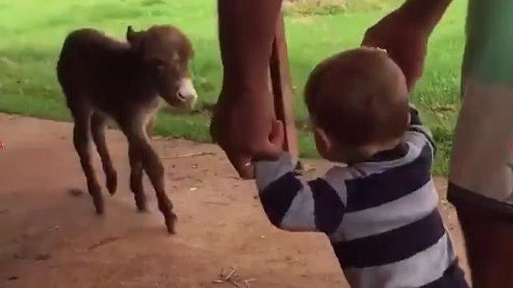 Животные знают толк в обнимашках..