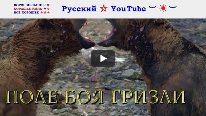 Хищники Аляски 🌏 Поле боя гризли