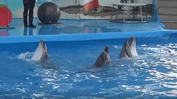 Вы слышали как поют Дельфины? Они ещё танцуют и даже рисуют! Такие милашки