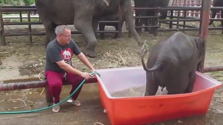 Маленький слоненок принимает ванну, Его попытки восхитительны