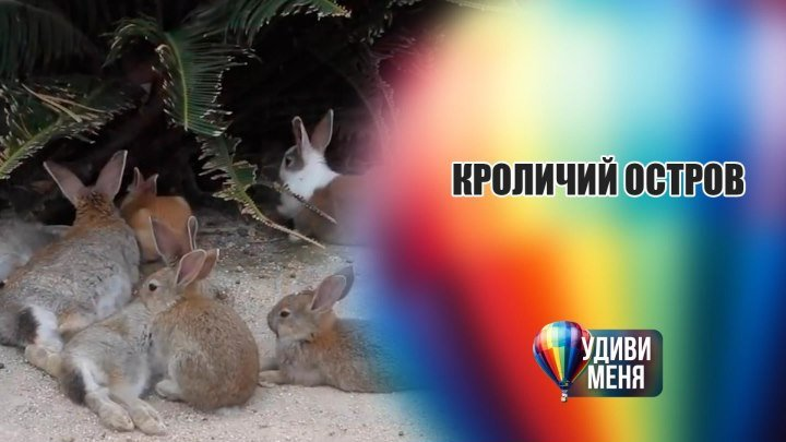 Остров населённый кроликами [Удиви меня]