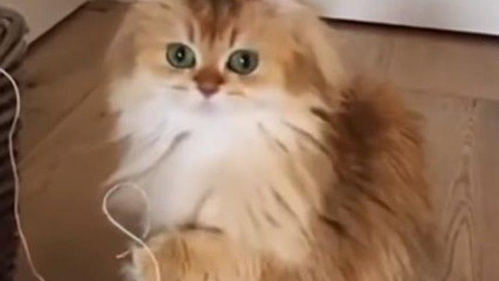 СМЕШНЫЕ КОТЫ - Смешные кошки Приколы про кошек и котов 2018