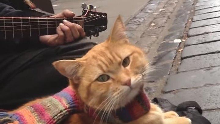 Вы слыхали как поют Коты? Этот даже круче чем Киркоров!