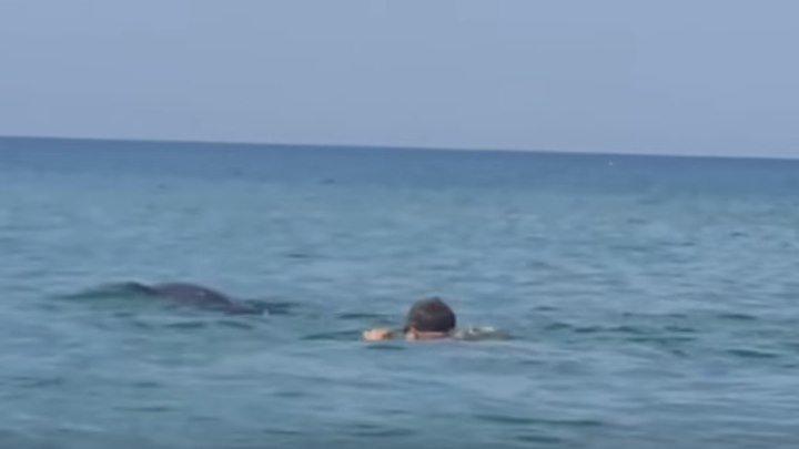 Дельфины в Анапе. Супер позитив!!!!