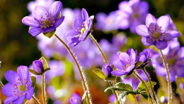 Удивительный танец весенних цветов под красивую мелодию