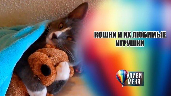 Кошки и их мягкие игрушки [Удиви меня]