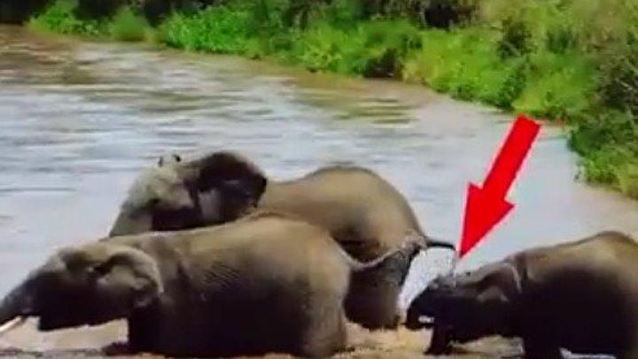 Слоненка унесло течением, только посмотрите, что делают остальные..