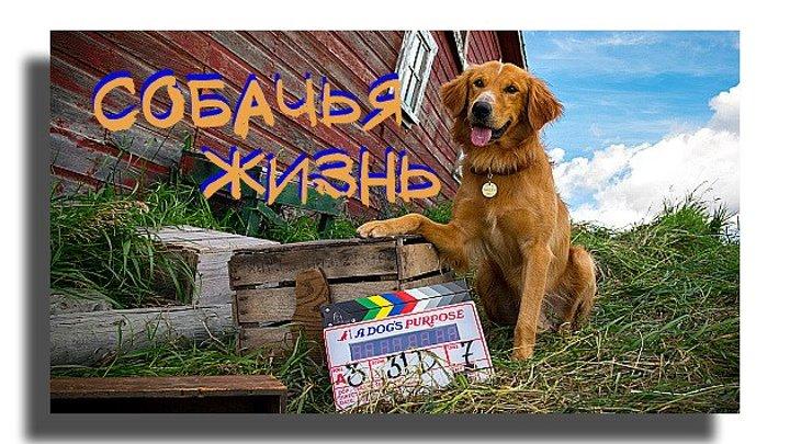 С русскими субтитрами