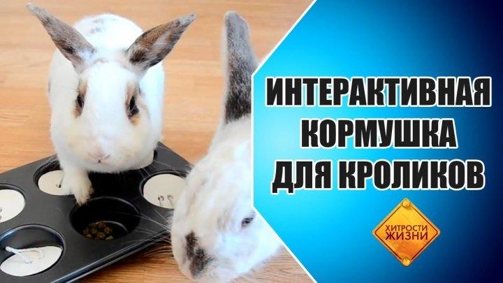 Развлекательная кормушка для кроликов