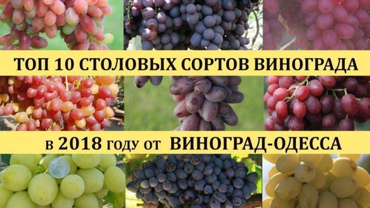 ТОП 10 ЛУЧШИХ СОРТОВ ВИНОГРАДА 2018 года(Top of the best grapes in 2018)