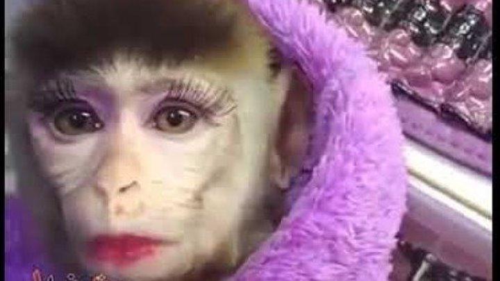 Накрашенная обезьянка