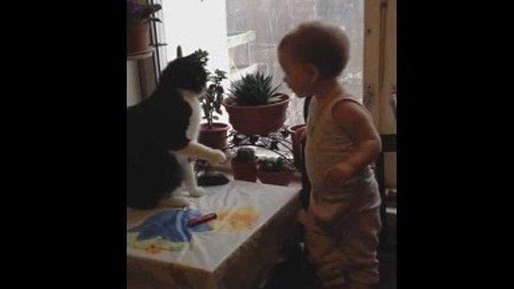 Смешное видео : бокс кота и малыша