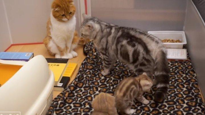Реакция кота-младенцев в первый раз, когда они увидели своего отца!!!