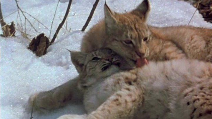 "х/ф ""Рысь возвращается"" (1986)"