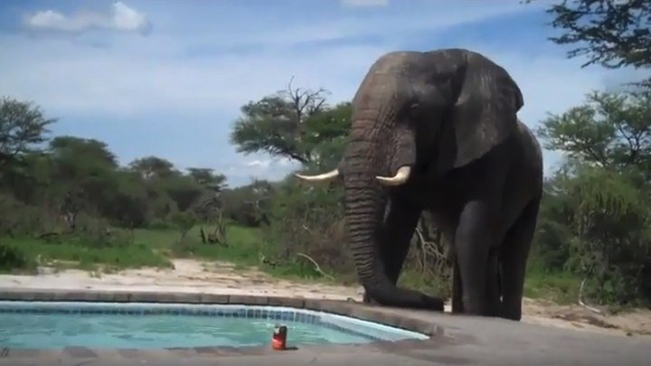 Жара привела к бассейну необычного гостя...)