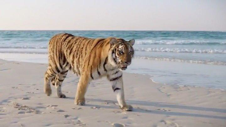 Тигры появляются ночью фильм смотреть онлайн