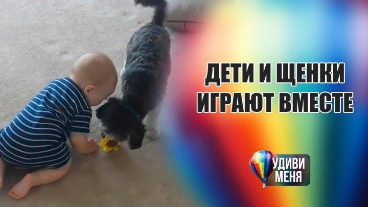 Дружба детей и щенков [Удиви меня]