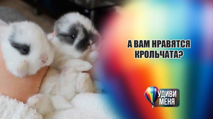 Милые крольчата [Удиви меня]
