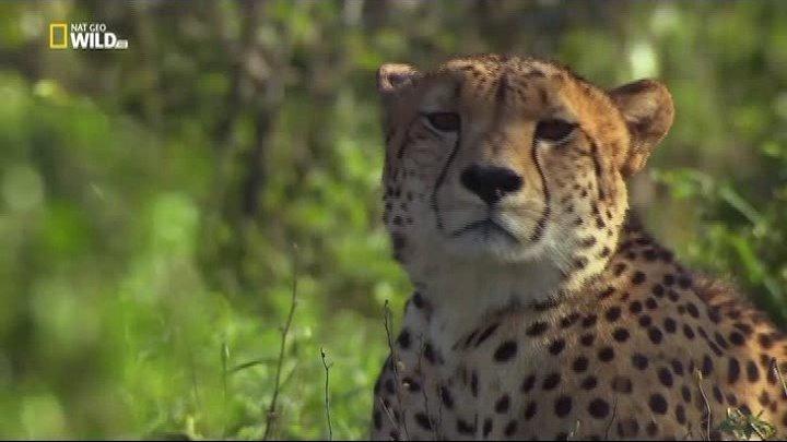Южная Африка_ Колыбель убийц (2017). документальный
