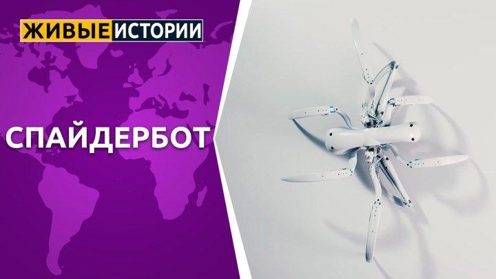 Спайдербот