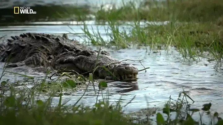 Битва болотных драконов (документальный фильм, 2017)