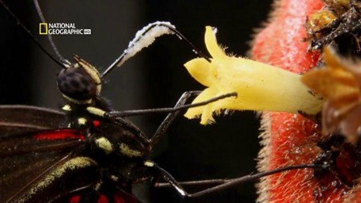 Удивительные насекомые (документальный фильм,2015)
