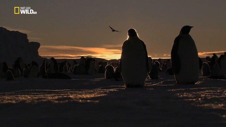 Дикая Антарктида (документальный фильм,2015)