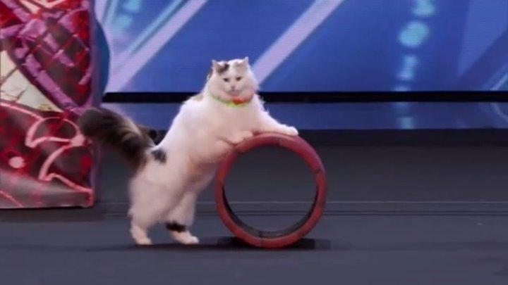 Украинские дрессировщицы кошек наповал сразили судей America's Got Talent 2018
