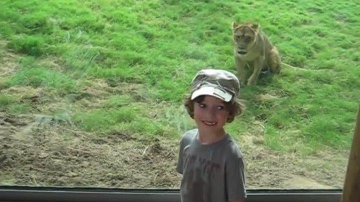 Дети в зоопарке!